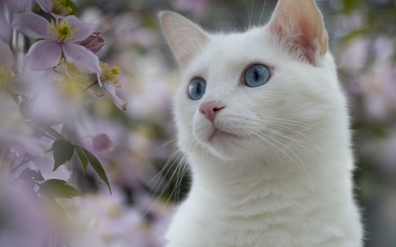 猫とたわむれる3姉妹。一人は猫嫌い(猫怖い?)。二人は猫大好き!